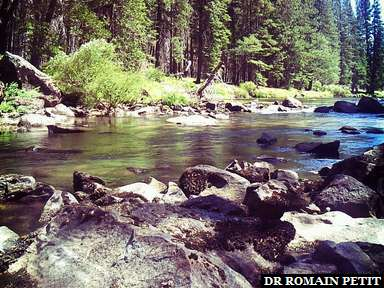 Merced River et El Capitan à Yosemite