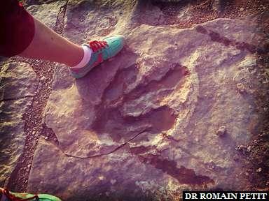 Trace de pas de dinosaure à Moab