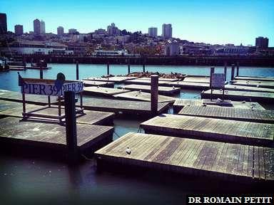 Des phoques à San Francisco