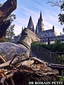 Hippogriff dans l'attraction Flight of the Hippogriff (Harry Potter) à Universal's Islands of Adventure