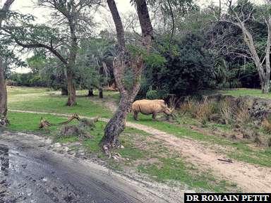 Attraction Kilimanjaro Safaris à Disney's Animal Kingdom