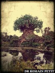 Tree of Life à Disney's Animal Kingdom