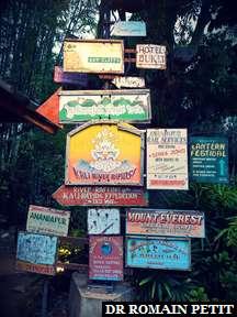 Décors de l'attraction Kali River Rapids à Disney's Animal Kingdom