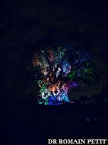 Spectacle nocturne sur le Tree of Life à Disney's Animal Kingdom