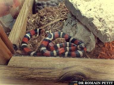 Serpent au Everglades Alligator Farm dans les Everglades