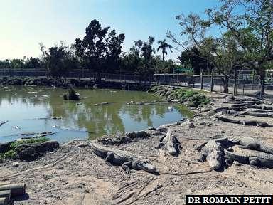 Alligators au Everglades Alligator Farm dans les Everglades