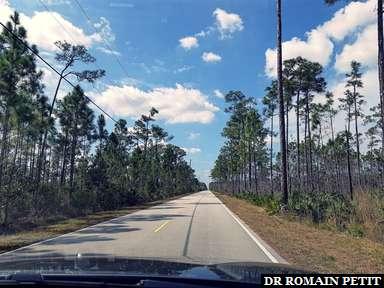 Traversée en voiture du Everglades National Park dans les Everglades