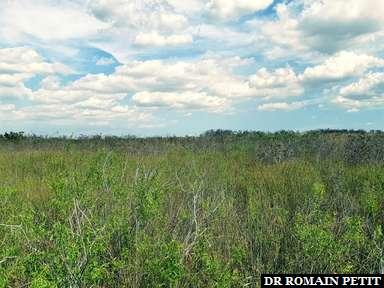 Panorama des everglades au Everglades National Park dans les Everglades
