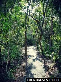 Marche dans le Everglades National Park dans les Everglades