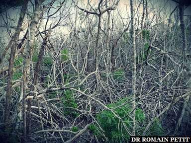 Faune des everglades au Everglades National Park dans les Everglades